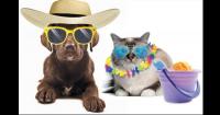 C'est l'été ! Votre vétérinaire vous conseille quant aux vacances de vos loulous !