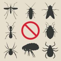 Puces, tiques et vers: Les conseils de votre clinique pour une meilleure prévention!